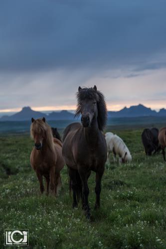 Iceland 2016-134