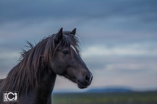 Iceland 2016-144